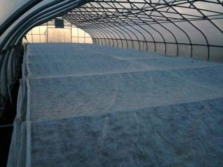 Winter greenhouse pic of covers